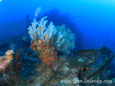 SS Perseus - Taprobane North Wreck Colombo