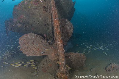 Taprobane East Wreck