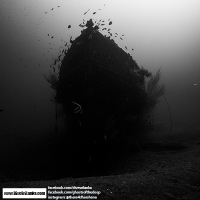 Black Coral Wreck - Colombo