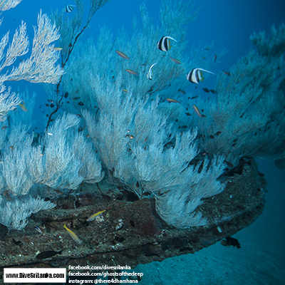 Black Coral Wreck